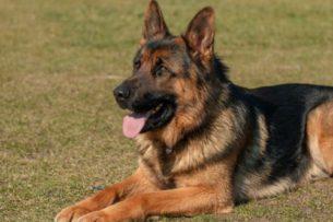 Коронавирус и домашние животные: как COVID-19 влияет на кошек и собак?