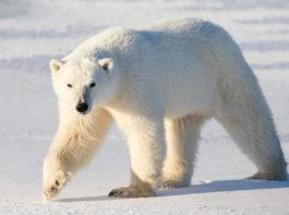 Видео: сотрудница зоопарка отбилась от медведя веником