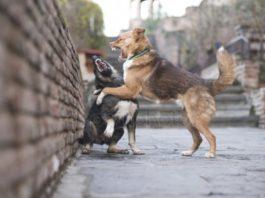 18 собак загрызли и съели своего хозяина