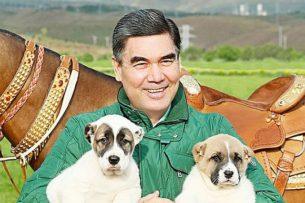 В Туркменистане  — жить хорошо, если ты алабай или ахалтекинец