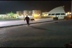 Дикий кабан «прогуливался» по площади первого президента Казахстана (видео)
