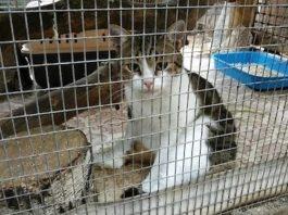 Кот-наркокурьер сбежал от следователей