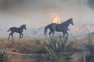 Лошадь вернулась в горящую конюшню, чтобы спасти семью