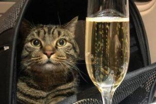 Сегодня – кот, а завтра – каждый из нас: реакция соцсетей на конфликт «Аэрофлота» и хозяина толстого кота