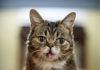 Умерла кошка Лил Баб, ставшая мемом. Она помогла собрать более $700 тыс. на нужды животных