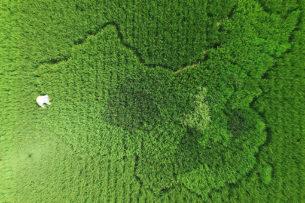Ученые: растения «кричат» от стресса
