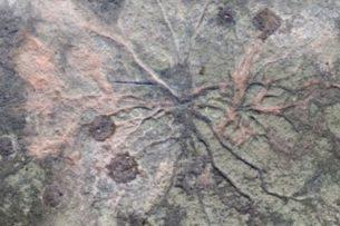 Ученые нашли старейший в мире лес из деревьев-грибов