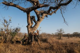 Собачья работа: борьба с браконьерами в Африке