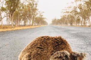Животные в Австралии обрадовались долгожданному дождю (фото, видео)