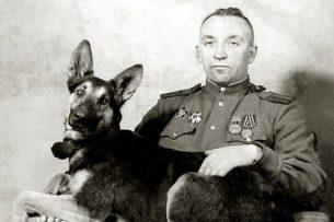 Джульбарс. Пёс, которого на Параде Победы несли на руках на носилках из шинели Сталина