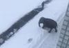Слон так обрадовался снегу, что нырнул в сугроб и начал резвиться
