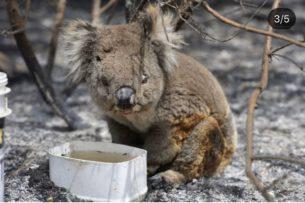В Австралии появилась гигантская коала на песке (фото, видео)