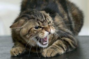 Кошка попыталась стащить змею, поймавшую белку на глазах у хозяина