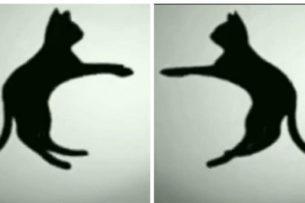 Новая оптическая иллюзия запутала пользователей Сети