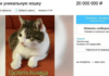 Хозяин просит за своего кота более 320 тысяч долларов. Почему?
