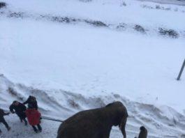Как в городе ловили слоних, сбежавших из цирка «на свободу» (фото, видео)