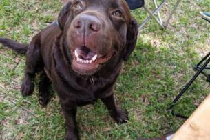 Шведские ученые обнаружили способность человека «заражать» собак стрессом