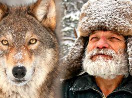 Лесник носил волку еду всю зиму: через 4 года хищник вернулся и показал свою семью