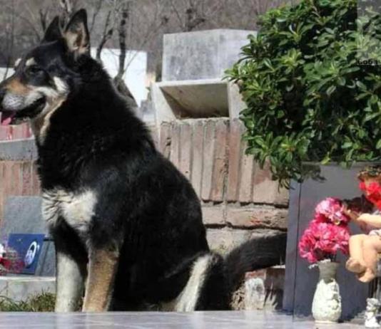 Ушел из жизни пёс, проживший 11 лет на могиле хозяина