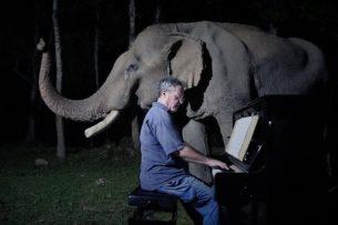 Для старого слона исполнили «Лунную сонату» Бетховена: видео