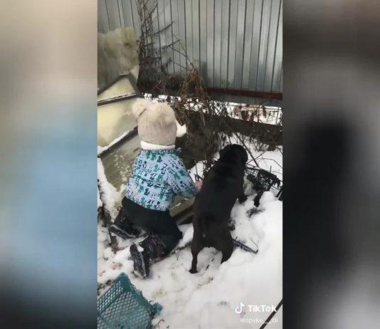 Мы её перегавкаем: Маленькая девочка и мопс «облаяли» соседскую собаку