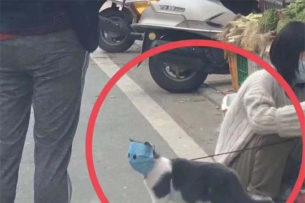 Хозяин хотел защитить кота от коронавируса, но случайно превратил его в мем
