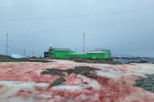 Красный снег на антарктической станции – зловещий знак потепления: фото