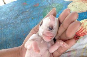 В Таиланде родился щенок-циклоп: видео