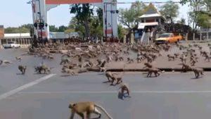 Опустевшие из-за карантина города занимают дикие звери
