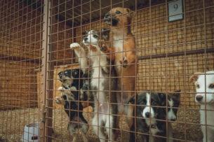 В якутском приюте нашли более сотни трупов собак и кошек с перерезанным горлом