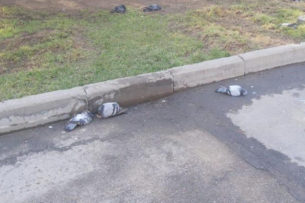 Жители Алматы сообщают о массовой гибели голубей. Появилось видео