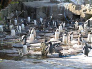 Пандемия лишили средств к существованию зоопарки