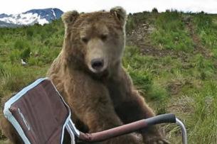 Медведь вышел из леса и сел рядом с рыбаком: мужчина незаметно достал телефон и стал снимать