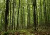 Ученые назвали быстрый рост деревьев плохим сигналом для климата
