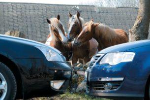 Что важней для быстрого разгона, крутящий момент или лошадиные силы в автомобиле?