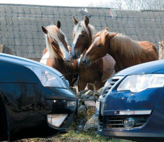 В российском регионе обеспокоены массовой скупкой лошадей представителями Кыргызстана