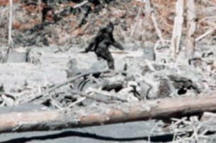 Четвероногие солдаты: как человечество использовало в бою слонов, пауков и даже йети