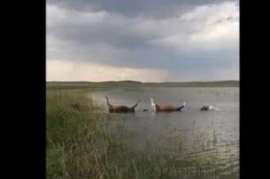 Молния убила 69 лошадей в Казахстане