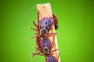 Маленькие гадости. Как одолеть комаров, клещей и других агрессоров