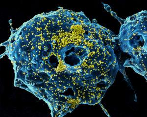 Нужно ли бороться с вирусами? Исследование