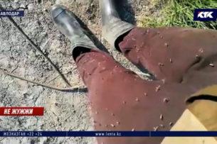 «Собаки воют, коровы мучаются»: насекомые атаковали казахское село