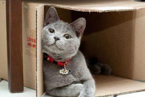 Почему кошки любят коробки?