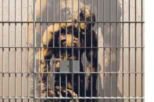 40 лет тюрьмы: Джордж Мартин — великий боксер, отказавшийся от свободы, богатства и славы ради друга