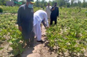 В Пакистане на месте пустыни появился лес (фото)
