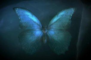 Ученые: нет никакого «эффекта бабочки»