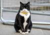 Палмерстон, официальный кот-мышелов МИД Великобритании, вышел на пенсию