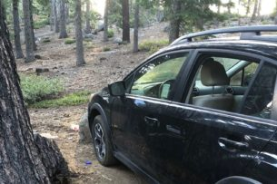 Медведь взломал и «обокрал» автомобиль
