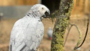 Это один из невоздержанных на язык попугаев