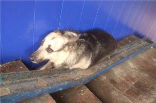 Четырех изнасилованных собак обнаружили в изоляторе для бездомных животных в Нур-Султане