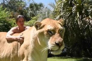 Геркулес: самая большая кошка мира весит как 2 льва и живет с людьми